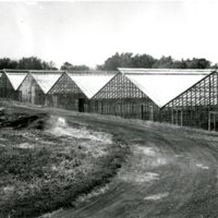 BS148-Decatur_Daut_Greenhouses.jpg